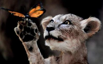 35 фото животных, которые заставят вас улыбнуться