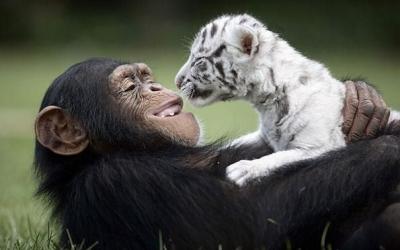 30 фотопримеров трогательной дружбы между животными