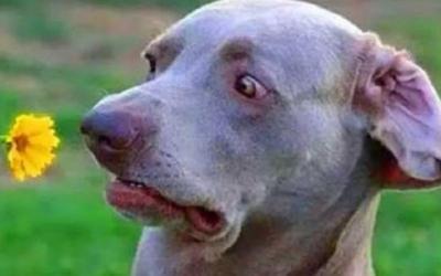 20 самых смешных фотографий собак