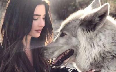 Волкособ, огромный и обаятельный друг человека, 20 фото