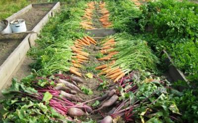 Как увеличить урожай с огорода