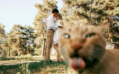28 испорченных, но очень смешных свадебных фото