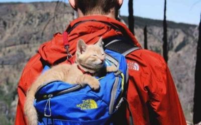 Коты-путешественники: 26 забавных фото
