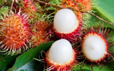 Самые необычные экзотические фрукты на планете, 25 фото