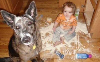 Собаки и дети, 100 милейших фотографий