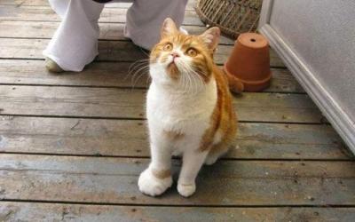 Как выглядят коты, которых искусали пчелы