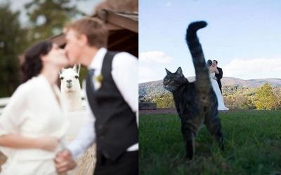 23 фото, которые доказывают, что животные не могут испортить фотографию