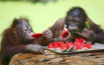Забавные животные: подборка самых удачных снимков (50 фото)