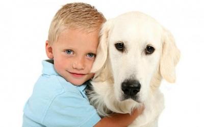 Лучшие породы собак для семьи, топ-10
