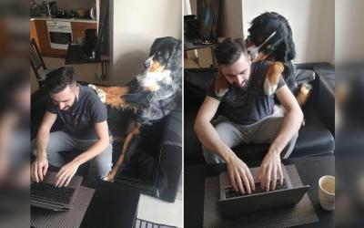 Вот как животные «помогают» работать людям при карантине