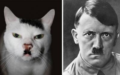 25 животных, которые очень похожи на известных людей