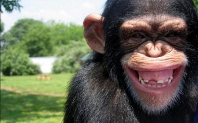 40 фотодоказательств того, что животные тоже умеют искренне улыбаться