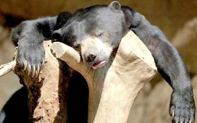40 смешных фото животных, которые как будто отходят после вечеринки