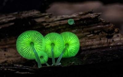 35 фото самых причудливых в мире грибов