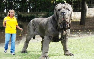 40 животных, поражающих своими размерами
