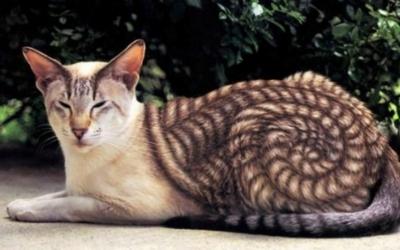 40 занимательных фото животных, на которых природа училась рисовать