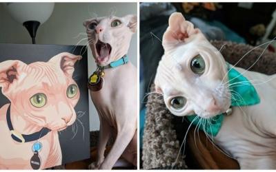 Самые смешные коты интернета, 50 фото