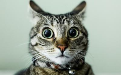 Коты против собак, 20 веселых фото