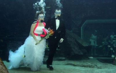 50 странных свадебных фото, которые вас точно рассмешат
