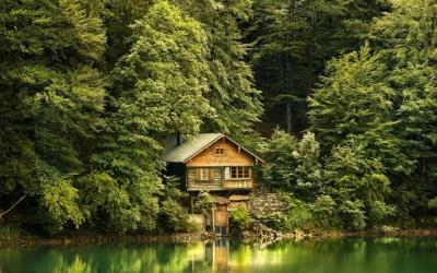 Прекрасная жизнь в лесу, 40 фото