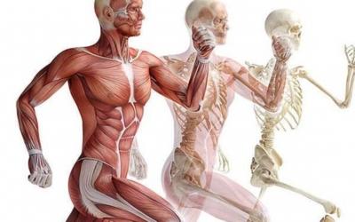 30 интересных фактов об организме человека