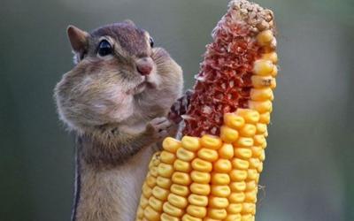 Ты — не ты, когда голоден: 40 уморительных снимков проголодавшихся животных