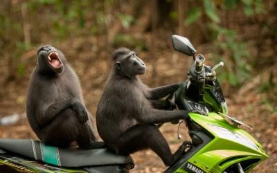 Комики из мира животных: 40 уморительных снимков