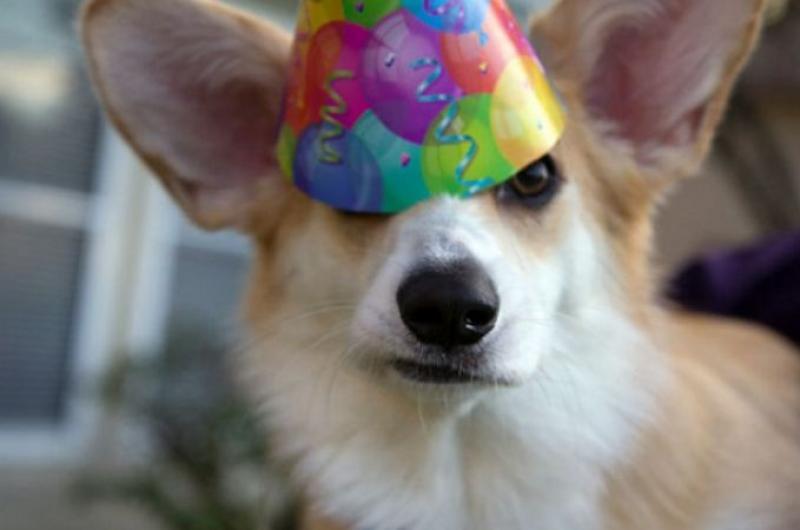 Картинки с животными на день рождения